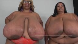 Las gordas negras Norma Stitz y Cotton Candi menean sus enormes pechos - Vídeo porno hd